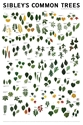 Sibleys Common Trees Eastern N. America Poster